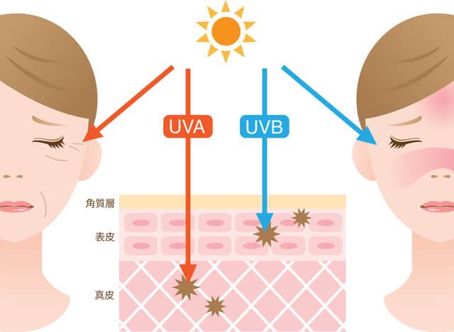 紫外線による影響